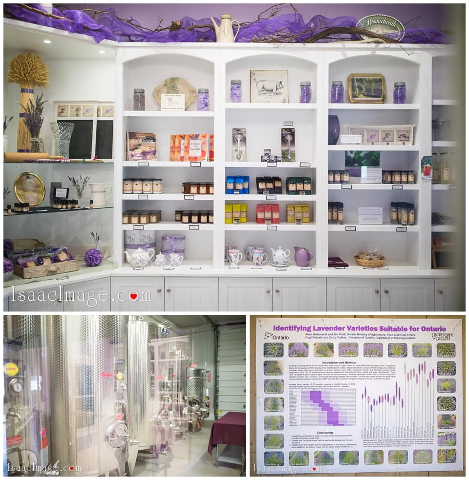 Bonnieheath estate lavender winery Engagement_3377.jpg