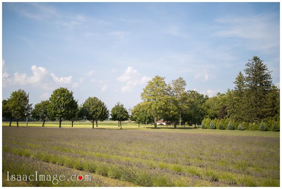 Bonnieheath estate lavender winery Engagement_3378.jpg