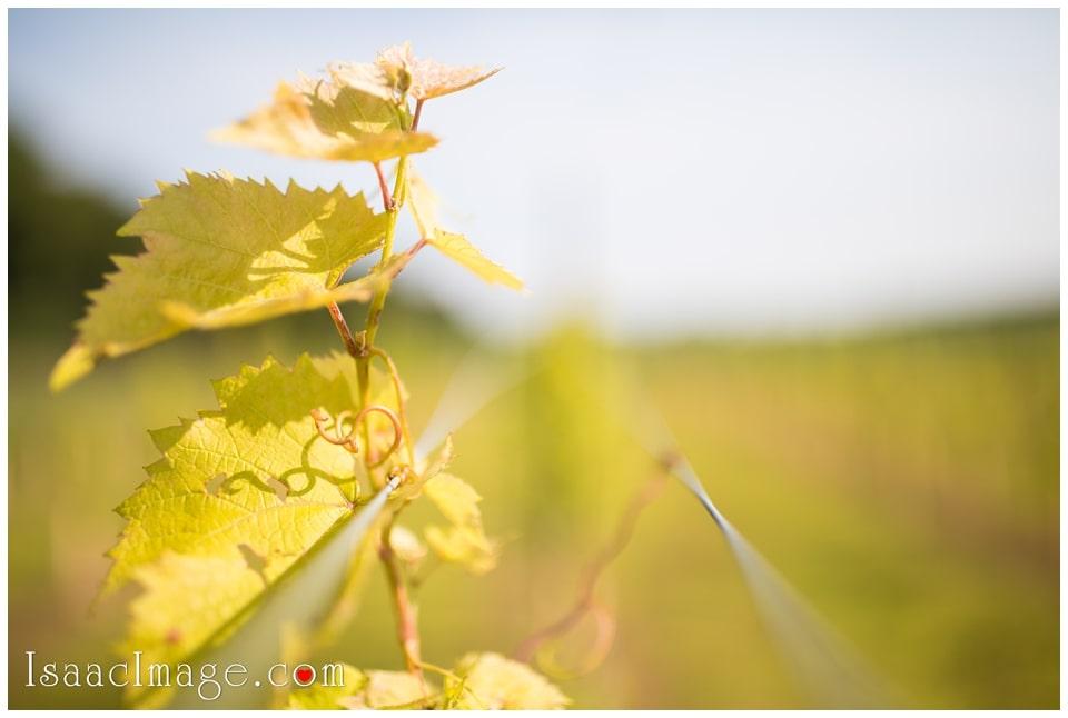 Bonnieheath estate lavender winery Engagement_3381.jpg